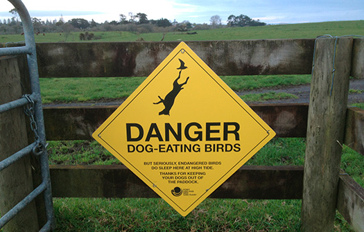 DOG-EATING BIRDS. I  thought this sign might be a fun way to get dog owners to keep their dogs out of the paddock. Great feedback so far.