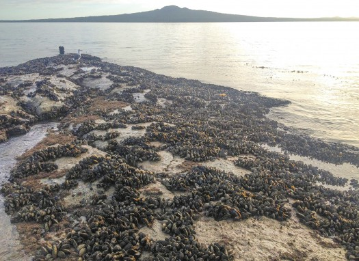Northern end of Reef 2