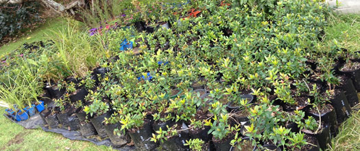 About 400 trees, many of them ready for planting.