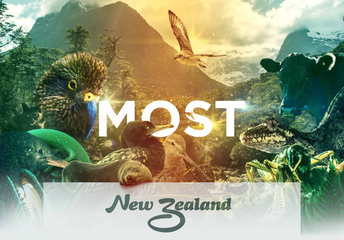 Most New Zealand