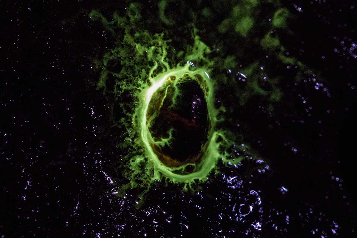 Bioluminescent Limpet. Opanuku Pipeline Track, Auckland, New Zealand
