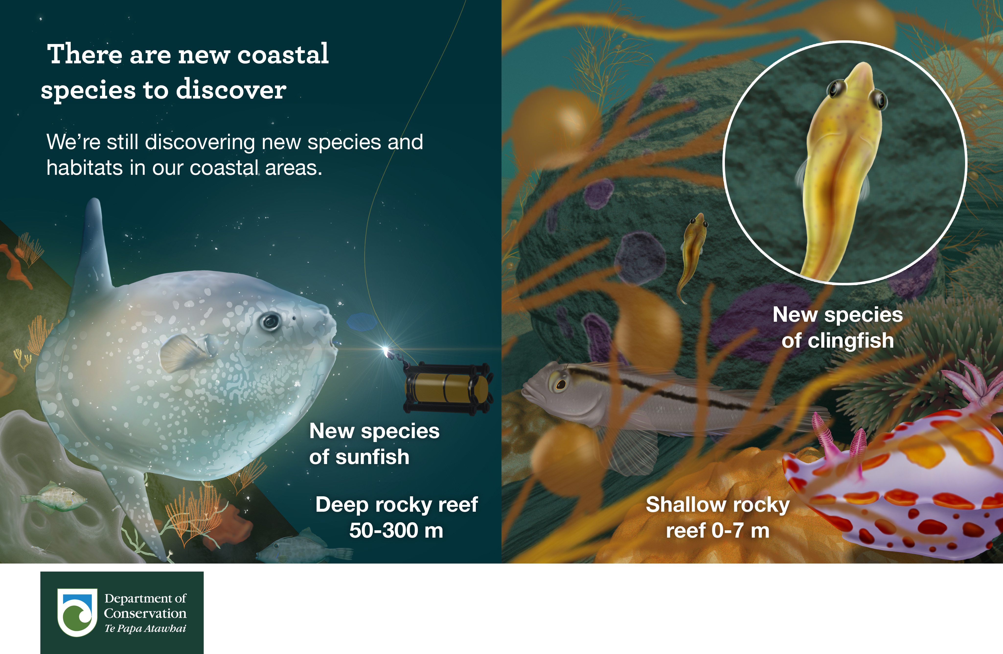 There are new coastal species to discover