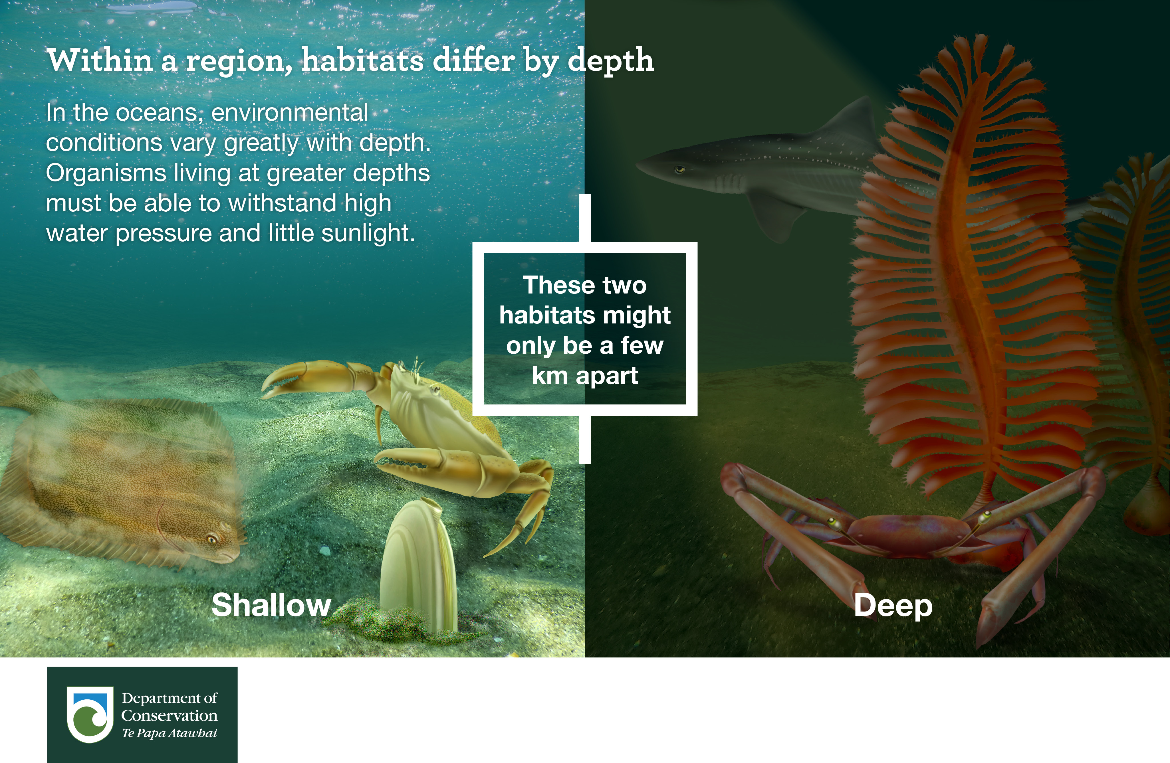 Within a region habitats differ by depth