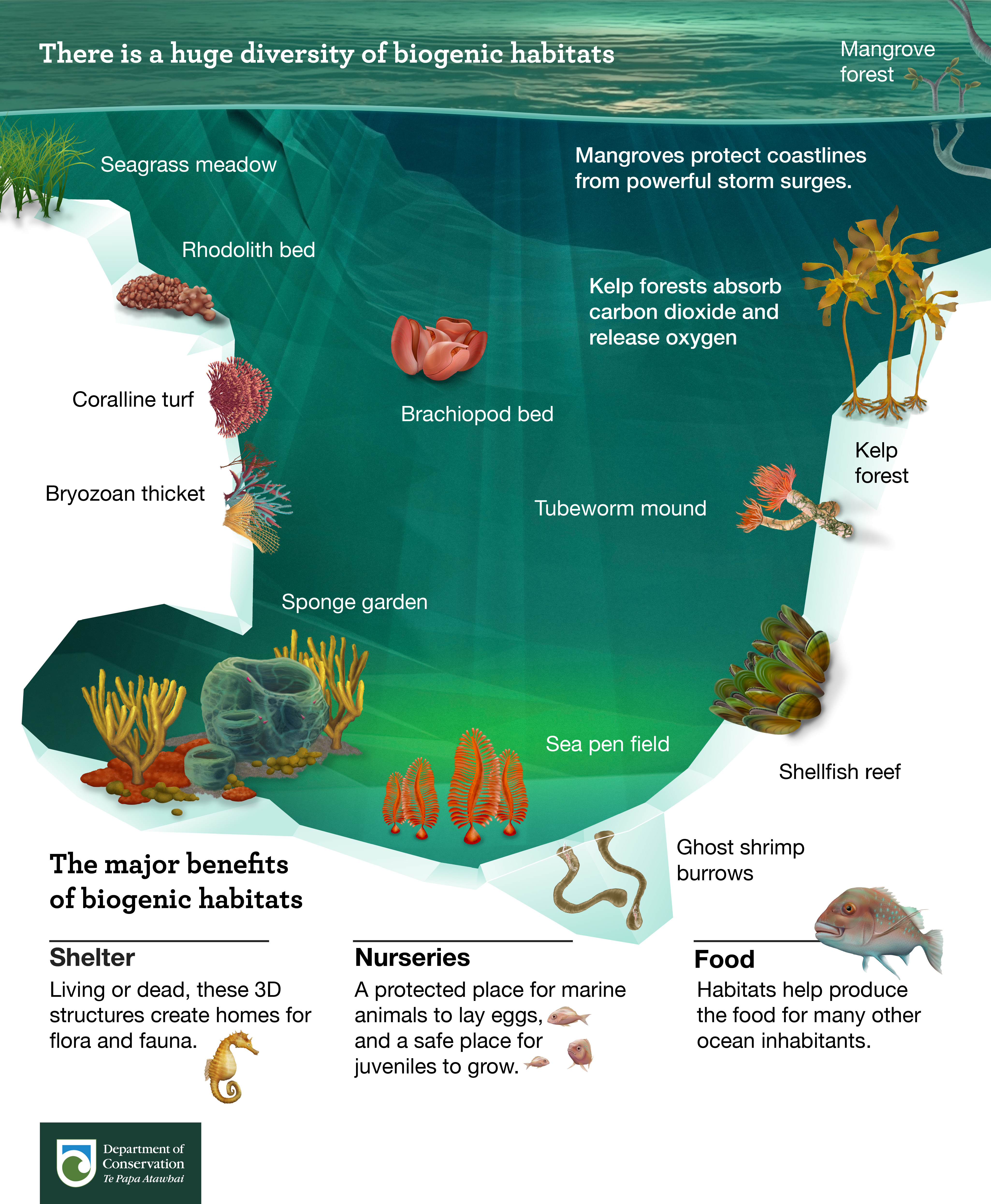 There is a huge diversity of biogenic habitats