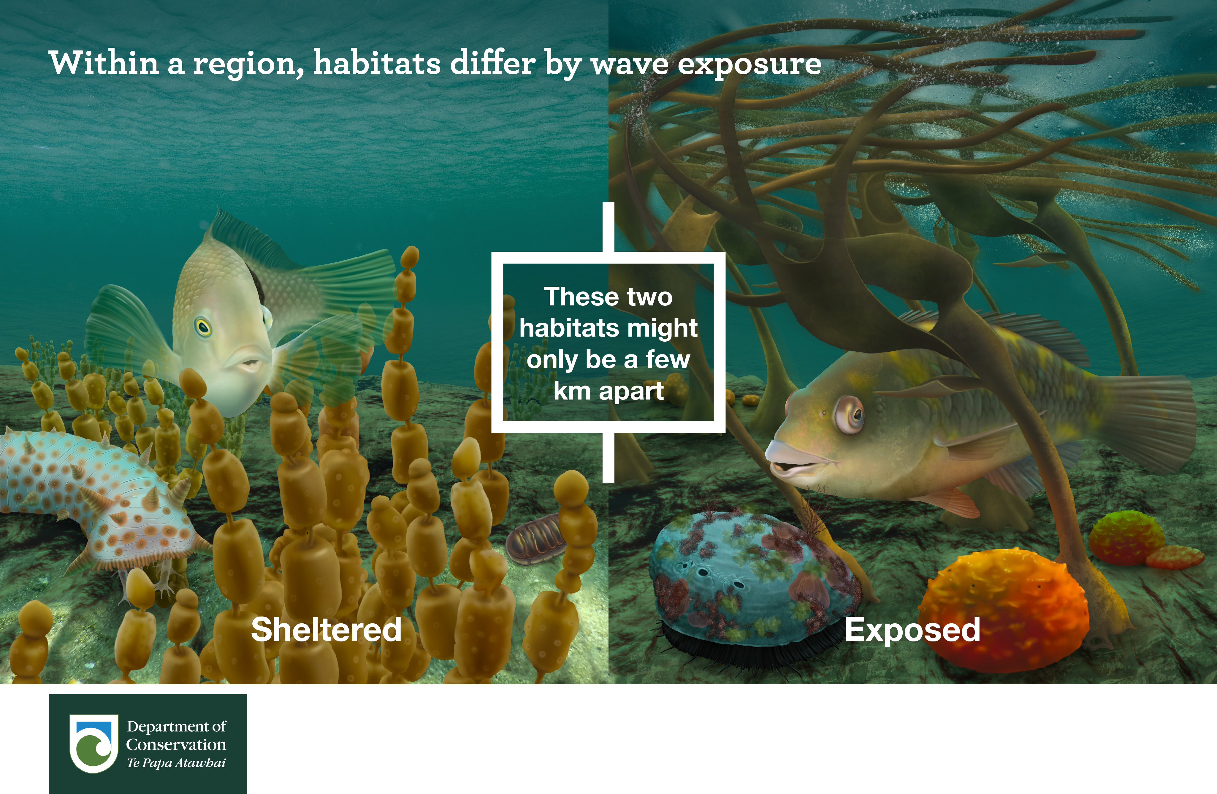 Within a region habitats differ by wave exposure