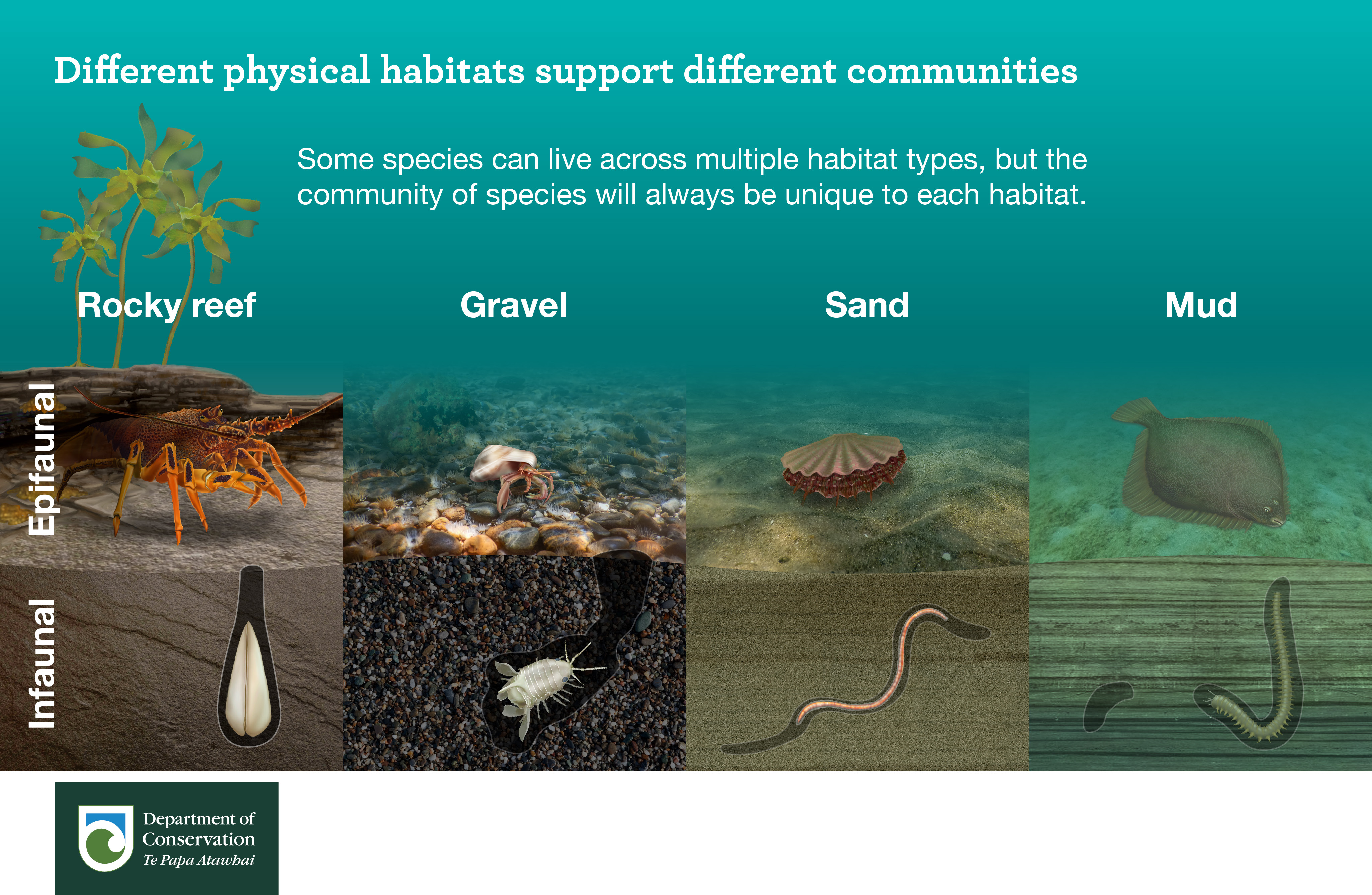 Different physical habitats support different communities