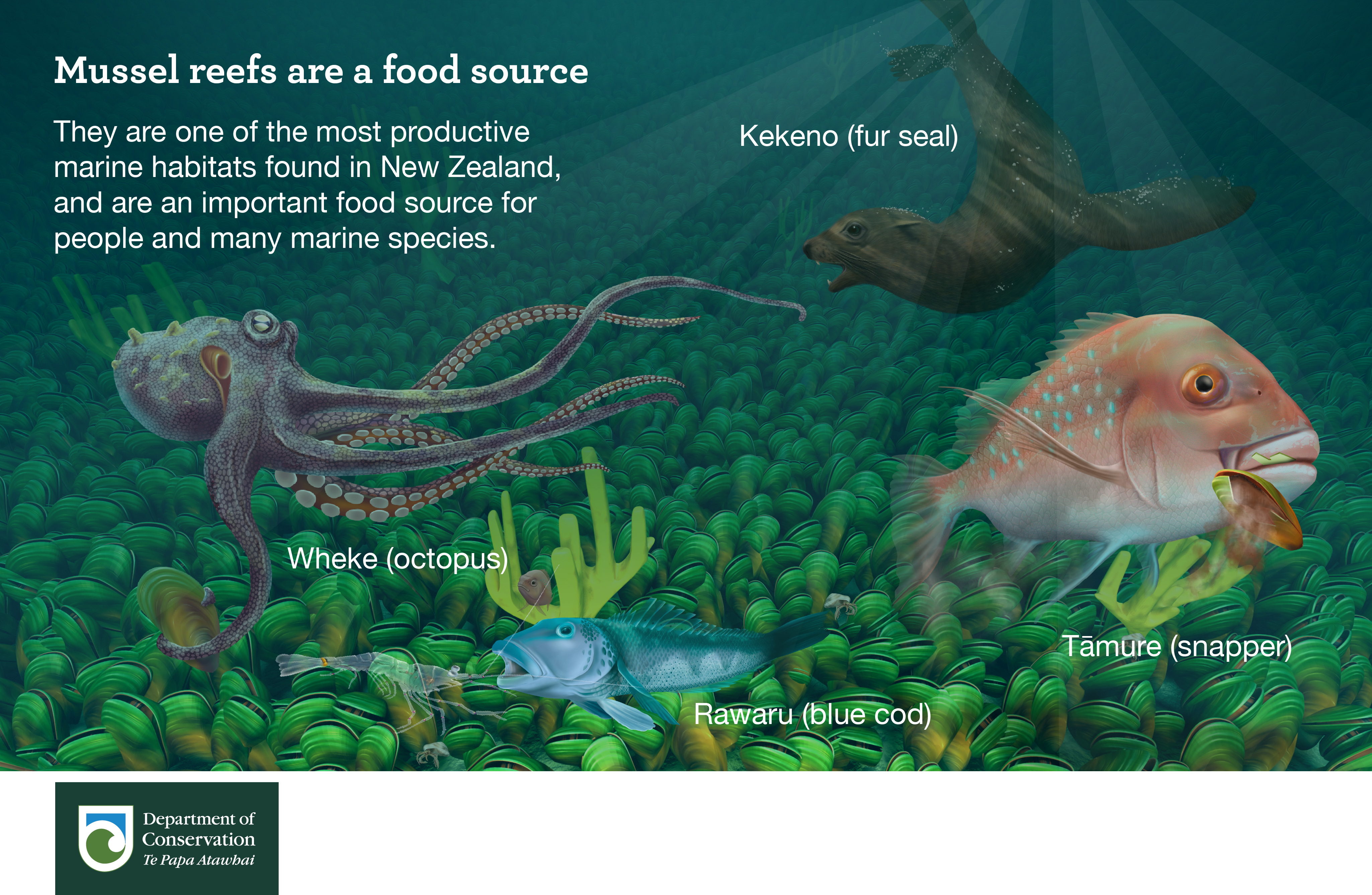 Mussel reefs are a food source
