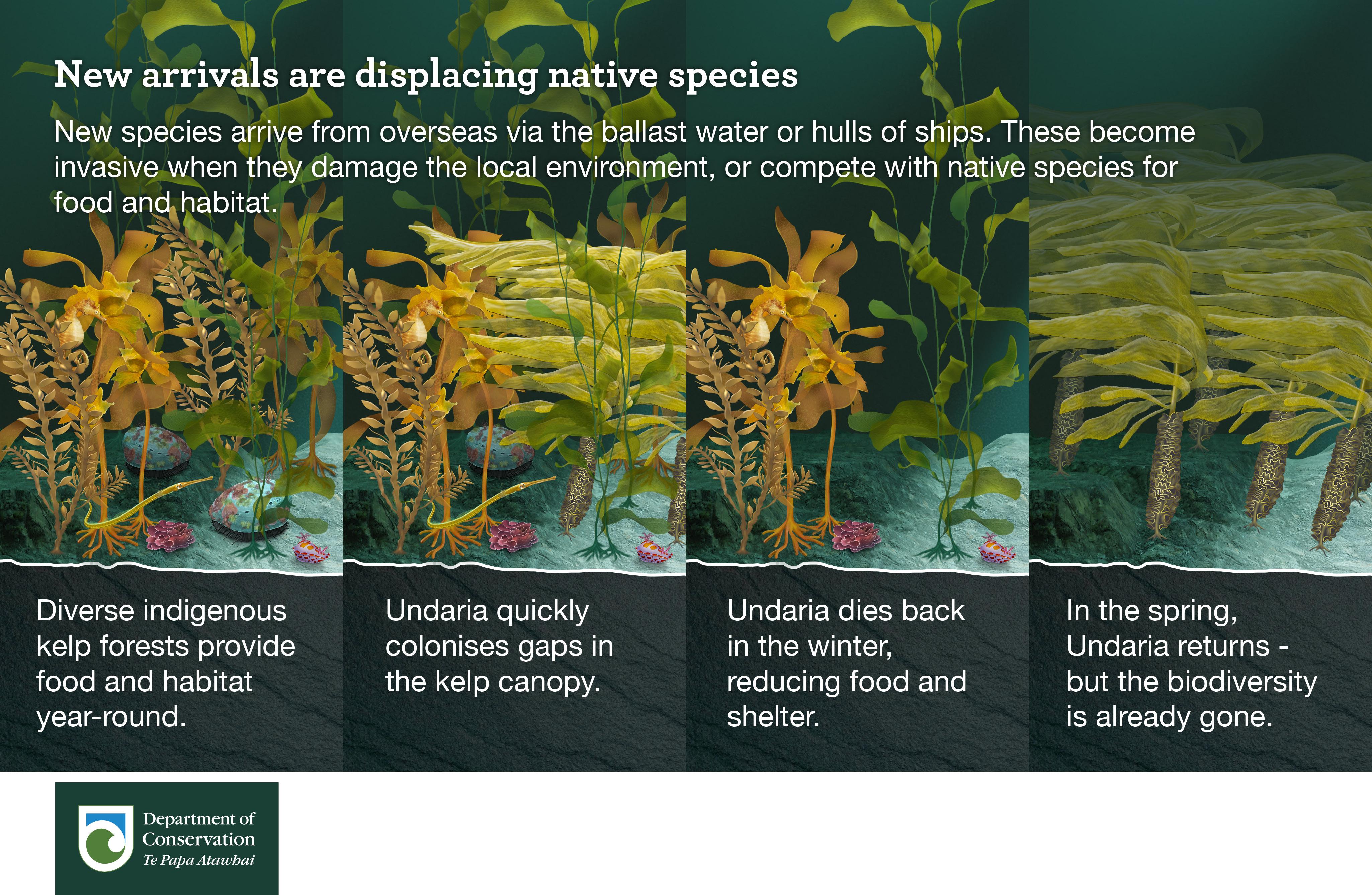 New arrivals are displacing native species