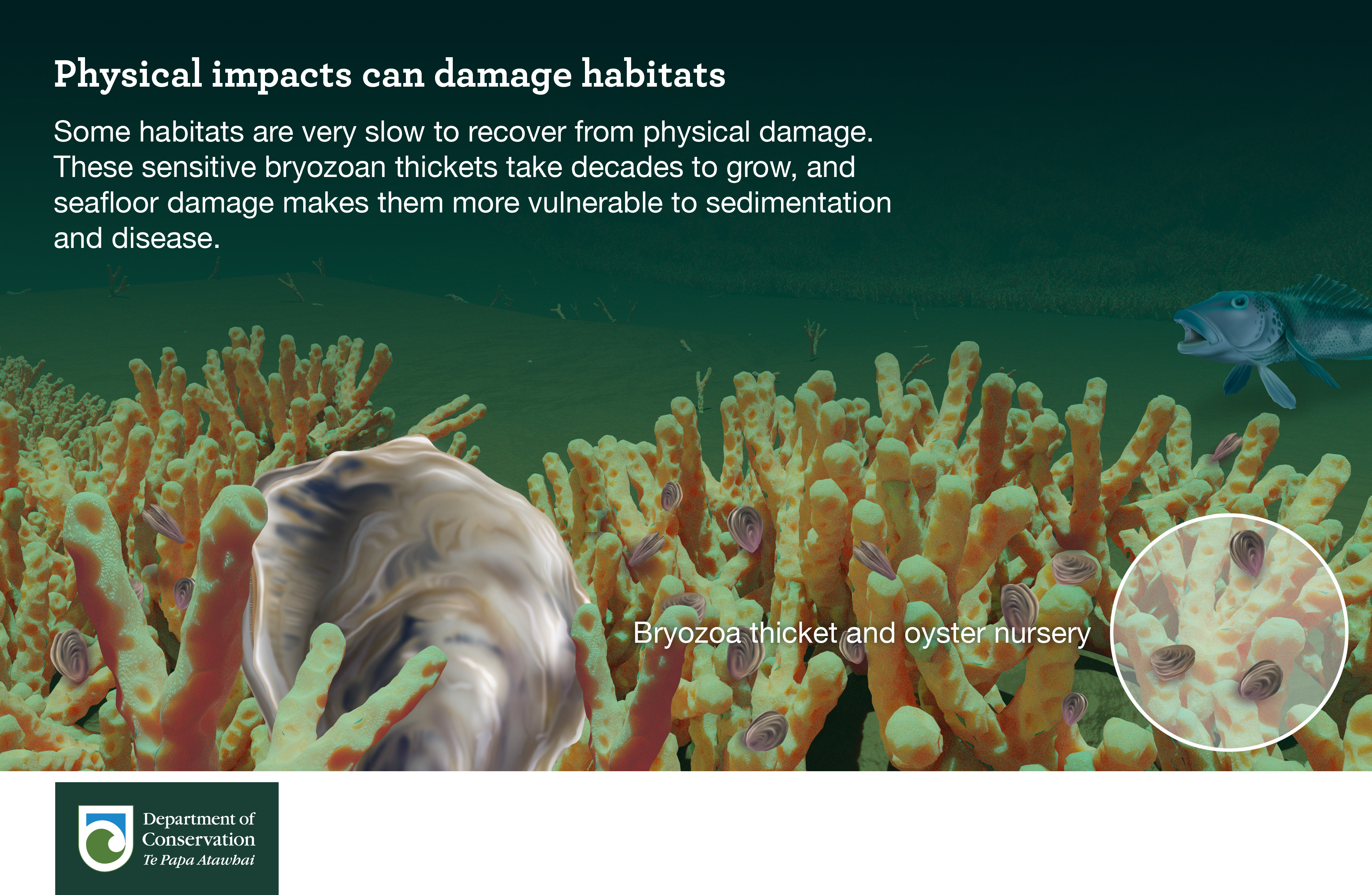 Physical impacts can damage habitats